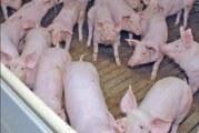 Pada cena svinjskog mesa