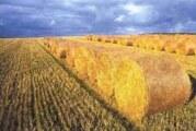 Električna energija iz biomase