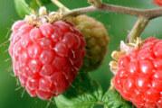 Rusiji sumnjiv rast izvoza voća i povrća iz Srbije