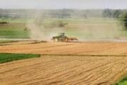 Zasejano znatno manje pšenice