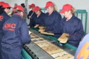 Novi proizvodni pogon drvne ambalaže u Baču