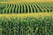 Nedimović: Nacrt mera za posledice suše narednih nedelja