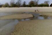 Akcija čišćenja na peščanom delu Štranda