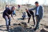 Širom Srbije posađeno 50.000 stabala drveća