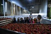 Nectar vrata fabrike otvorio deci