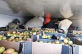 Horgoš: Migranti u hladnjači punoj jabuka