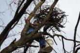 Srbija čuva krstaše: Gnezda za najređe orlove u okolini Novog Kneževca