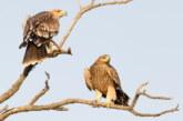 Raduj se Srbijo – vraćaju se orlovi krstaši!