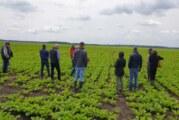 Dani polja šećerne repe: Zasejano za četvrtinu više nego prošle godine