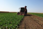 Sunoko: počinje kampanja prerade šećerne repe