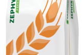 Napravite najbolji odabir sorti pšenice i obezbedite potencijal za postizanje visokih prinosa