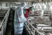 Kampanja sprečavanja širenja afričke kuge svinja proširena na nove zemlje