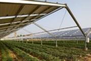 Agrosolar Kula – prvi agroenergetski projekat u našoj zemlji i na Balkanu