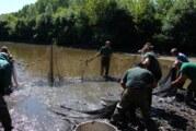 Spaseno i ispušteno u Dunav više od 330 kg autohtone ribe