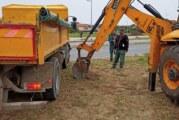 Gradsko zelenilo počinje nove sadnje u Novom Sadu i okolini